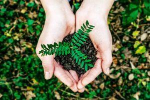 noah buscher datec nachhaltigkeit